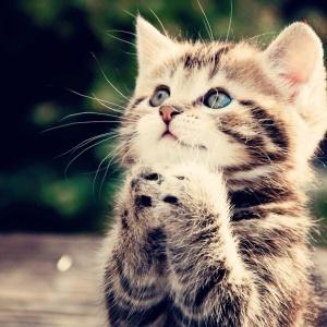 beggin-kitten