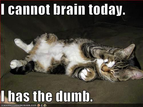 Syllabus Cat Meme