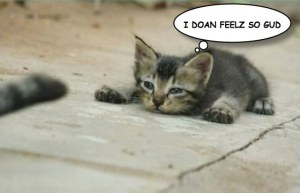 cat-ill