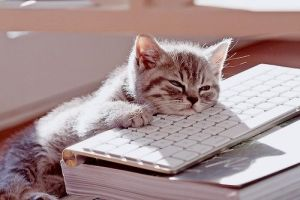 Chat-clavier