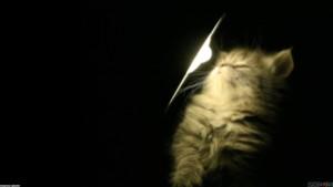 cute_kitty_in_spotlight_1920x1080