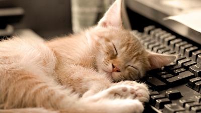 Animals_Cat_Kitten_Keyboard_Sleep_61984_detail_thumb